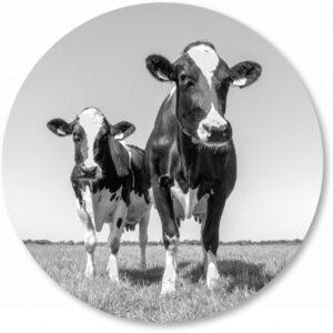 Basisbestand-vormen_0005_koeien-z-w.png