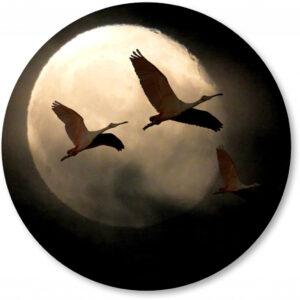 Basisbestand-vormen_0055_kraanvogels-maan.png