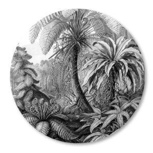 Jungle-Haeckel-zwartwit-wandcirkel_muurcirkel.png