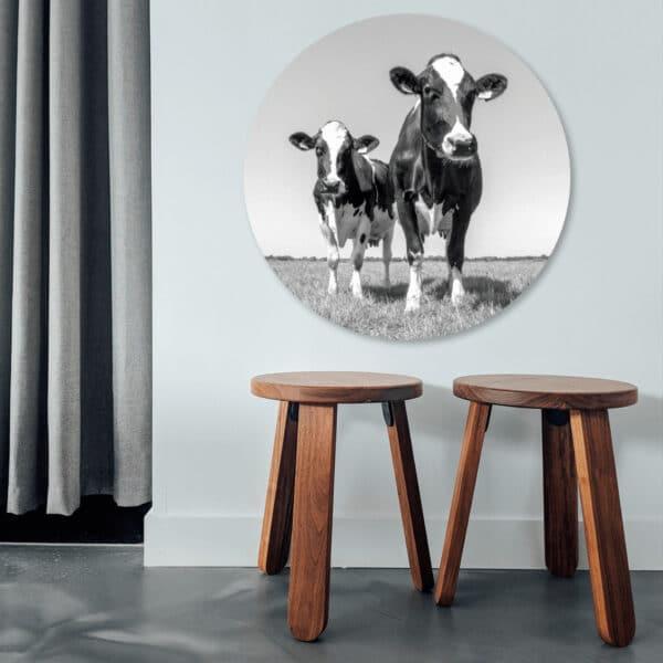 Koeien-zw-volgfoto1.png