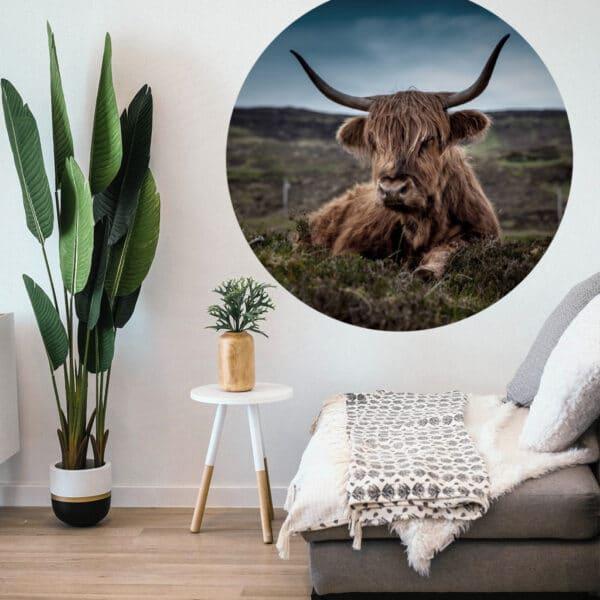 Schotse-hooglander-volgfoto-1.jpg